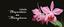 Coleção Orquídeas da Amazônia.png
