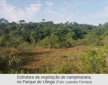 Estrutura da vegetação de campinarana, no Parque do Utinga
