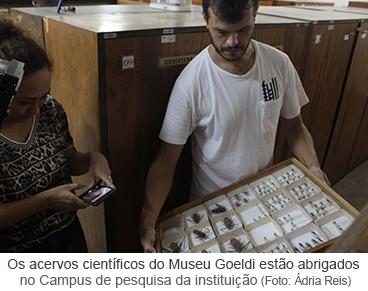 Os acervos científicos do Museu Goeldi estão abrigados  no Campus de pesquisa da instituição