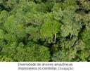 Diversidade de árvores amazônicas impressiona os cientistas