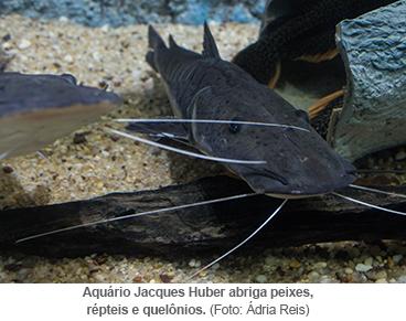 Aquário Jacques Huber abriga peixes, répteis e quelônios.