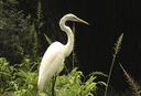 miniatura-aves.png