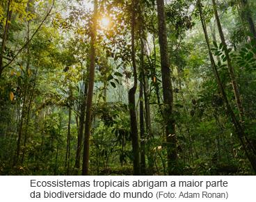 Ecossistemas tropicais abrigam a maior parte da biodiversidade do mundo