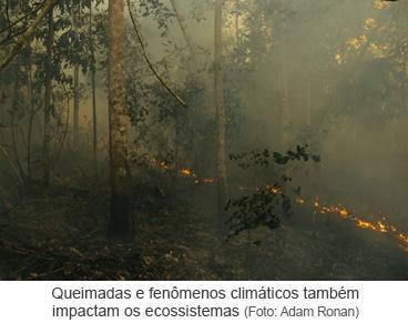 Queimadas e fenômenos climáticos também impactam os ecossistemas