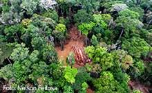 Amazônia - miniatura.jpg