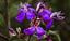 Flora de Carajás.png