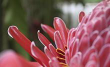 Pós-Graduação em Botânica Tropical divulga resultado final da seleção de mestrado.png