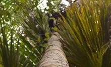 """Serão ofertadas 19 vagas para mestrado e 16 para doutorado, distribuídas em duas linhas de pesquisa – """"Interação Clima, Sociedade e Ambiente"""" e """"Ecossistemas Amazônicos e Dinâmicas Socioambientais""""."""