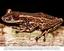 Projeto documenta espécies de anfíbios ameaçados de extinção no Brasil - Fotolegenda 1.png