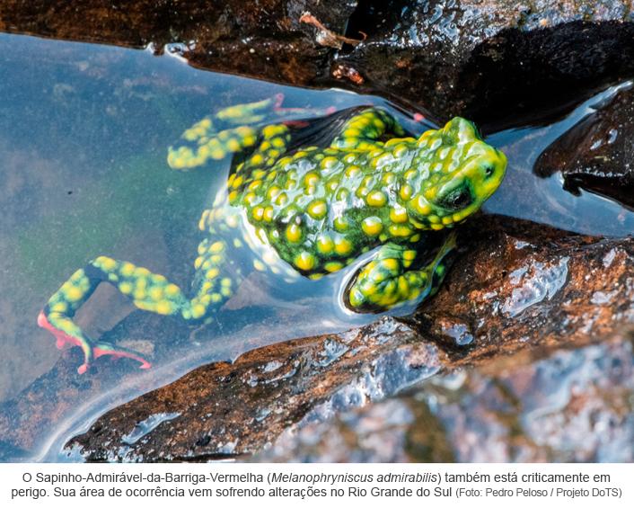 Projeto documenta espécies de anfíbios ameaçados de extinção no Brasil - Fotolegenda 2.png