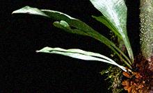 Miniatura_24-06.png