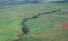 Seminário discute restauração florestal em áreas de mineração.png