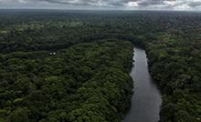 Seminário Restauração Amazônia.png
