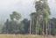 dia 5 - Simpósio Amazônia Sustentável propõem diálogo entre ciência e sociedade.png