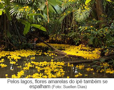 Pelos lagos, flores amarelas do ipê também se espalham