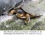 400 filhotes vivem no Parque, incluindo os te tartarugas-da-amazônia