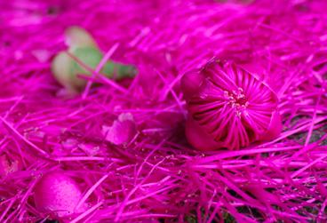 miniatura-florada.png