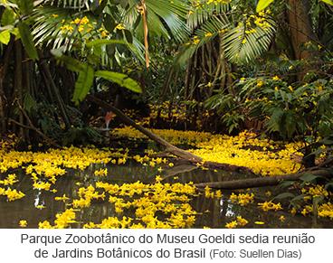 Florada ipê amarelo no Parque Zoobotânico
