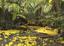 Florada ipê amarelo no Parque Zoobotânico.png