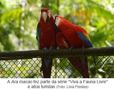 """A Ara Macao fez parte da série """"Viva a Fauna Livre"""" e atrai turistas.png"""