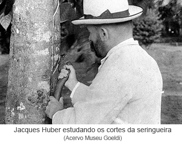 Jacques Huber estudando os cortes da seringueira.png