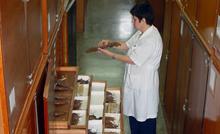 Coleção de Mastozoologia.png