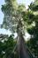 dia 29 - gigante da floresta 1.png