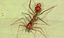 Miniatura - Aranha.png